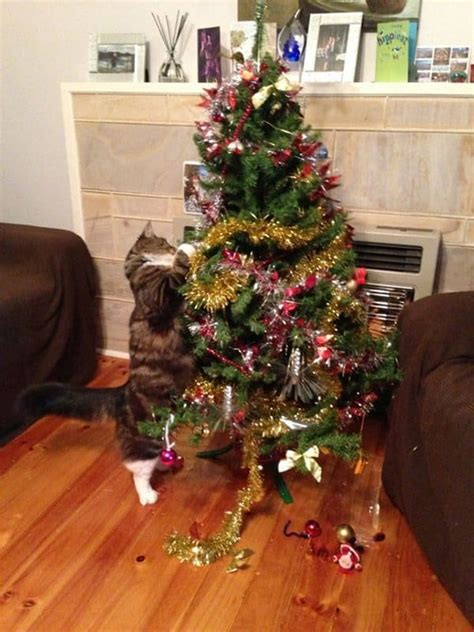 cat first seen christmas tree 14 cats helping to decorate trees part 1