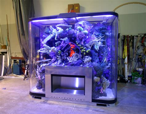 aquarium design photos design services