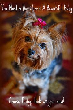 are yorkies yappy yappy terriers on yorkie yorkies and yorkie puppy