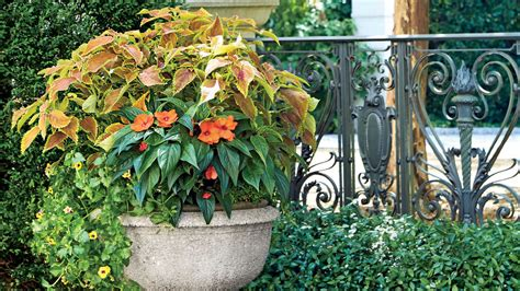 Spectacular Container Gardening Ideas Southern Living Southern Flower Gardens