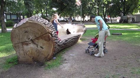 bench made out of tree trunk a bench made of a tree trunk in vilnius youtube
