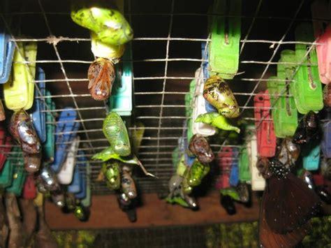 Gamis Dress Kupu Kupu Dotte Butterfly Dress Saja harga tiket masuk butterfly park bali taman kupu kupu kemenuh tabanan lokasi gianyar