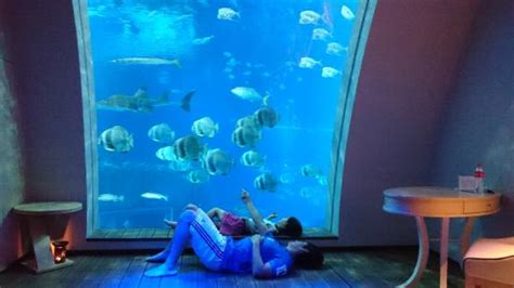 seafront home in singapore with underwater media room room aquarium view picture of resort world sentosa