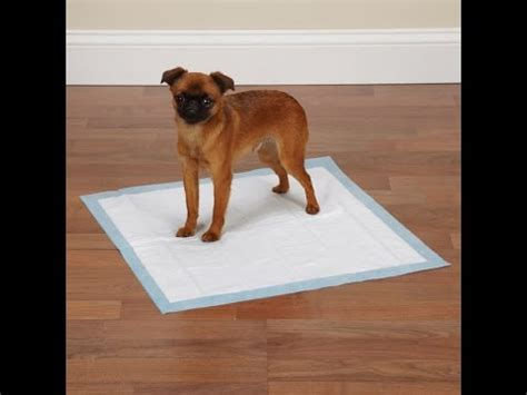 how to break a dog from peeing in the house house break dog why pee pads shouldn t be used youtube