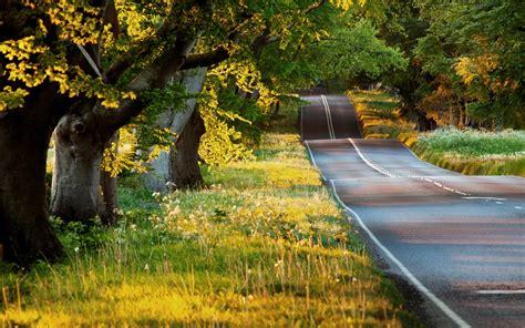 wallpaper summer landscape road trees grass sunshine