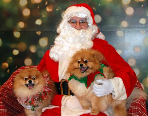 santa puppy all list of different dogs breeds december 2012