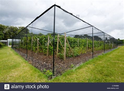fruit tree cage fruit protection cages images