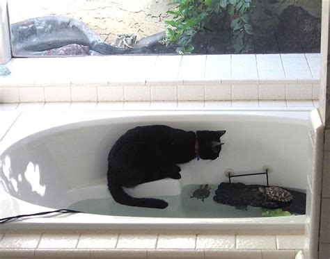 turtle in bathtub our new kittens