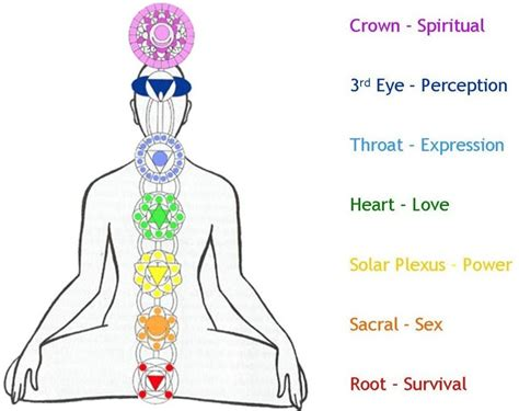 sacral chakra location chakras in complete art