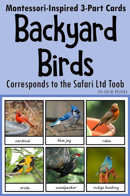 montessori inspired backyard birds  part cards   pond