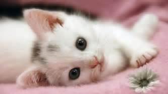 Cute little kitten cats photo 37055438 fanpop