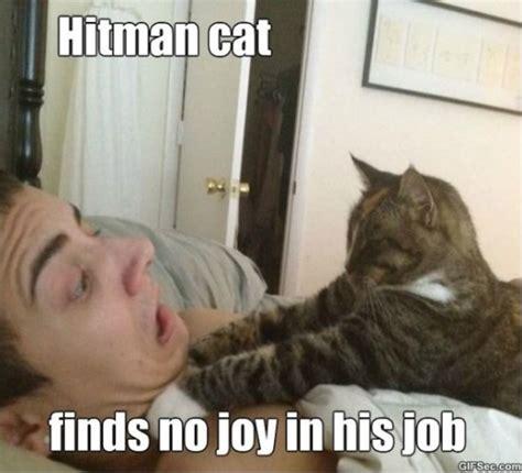 Lol Memes Funny - hitman cat meme 2015