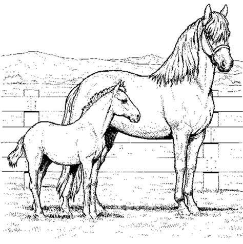 coloring pictures of a horse coloring pages of horses coloring town