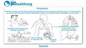 zoonosis pethealthcare co za