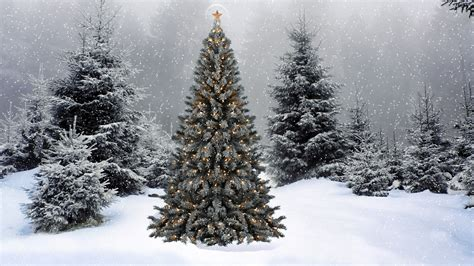 snow falling on the christmas tree wallpaper holiday