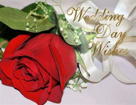wedding wishes with pictures wedding wishes and messages 365greetings