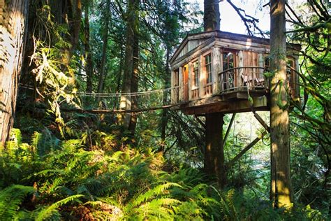rainforest hotel built in the trees tree house point captivatist