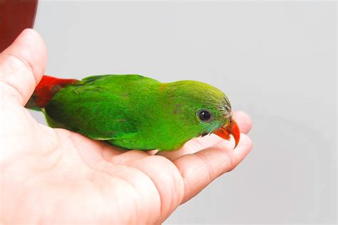 how can you tell how big a puppy will get how to tell if your bird has mites 3 steps with pictures