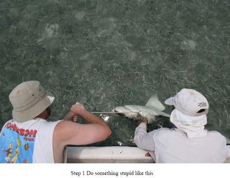 Shark Attacks Related Incidents Shark Attack Survivors   shark attack related incidents autos post
