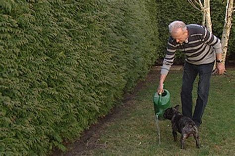 hundetoilette im garten anlegen der hunde und katzengarten nieder 246 sterreich heute