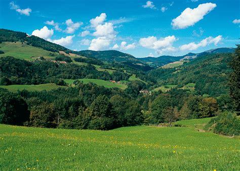 imagenes de verdes praderas vinilos de paisajes pradera 4 viniliza