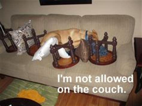 keep your dog off the couch 1000 images about dogs on couches on pinterest couch