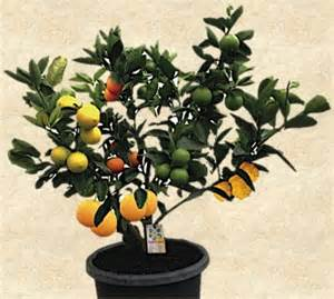 splicing fruit trees tasty fruit salad tree recipes on healthy