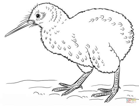 coloring page kiwi bird kiwi bird coloring page free printable coloring pages