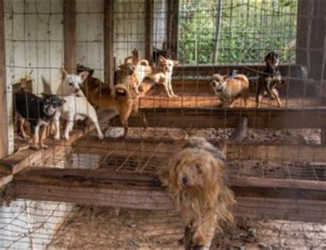 puppy mills articles how to fight a puppy mill dahna bender