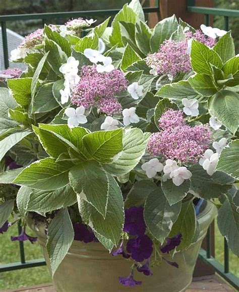 hardest flower to grow 14 easy to grow plants to put in the ground this spring
