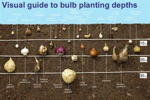 how to grow bulbs quiet corner