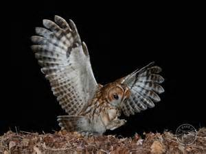 Owl Accessories Tawny Owl Nestboxes The Barn Owl Trust