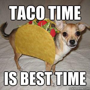 Taco Meme - taco bell polar bear memes