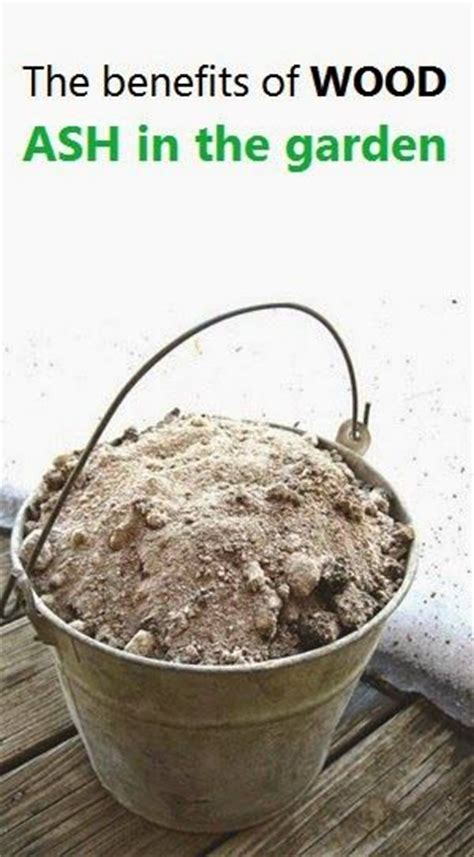 Wood Ashes In Garden by Alternative Gardning The Benefits Of Wood Ash In The