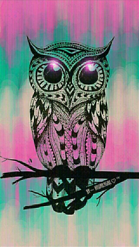 colorful owl wallpaper cute owl wallpaper 66 images