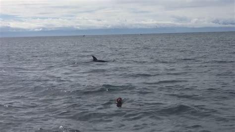 golden retriever rescue vancouver golden retriever filmed swimming with orcas clover point ctv vancouver island news
