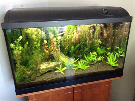 120 liter aquarium 4107 photos d aquarium page 81