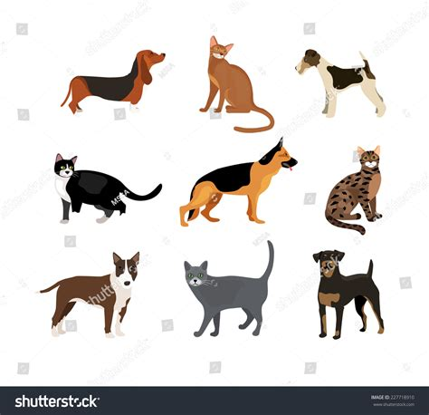different colored rottweilers cats and dogs illustration showing different breeds including a rottweiler fox terrier