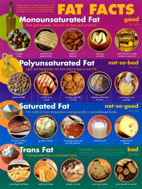 2 types of healthy fats 17 best images about ks2 science on habitats