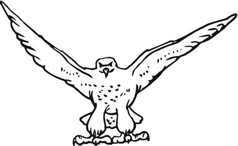 coloring page falcon bird hawk falcon coloring pages for kids preschool and