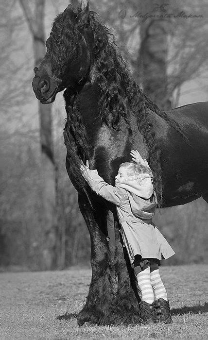 1269 best images about fierce 230 best images about beautiful horses on