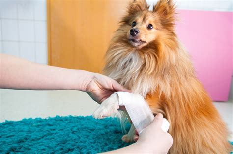 neosporin for dogs is neosporin safe for dogs