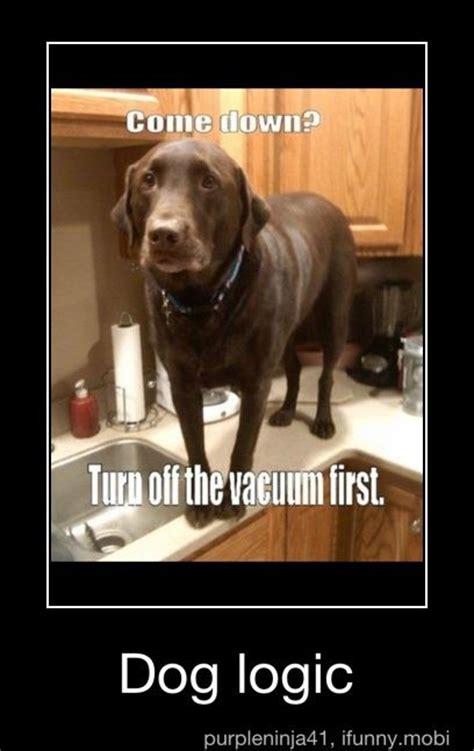Dog Logic Meme - 1000 images about ifunny on pinterest free website too