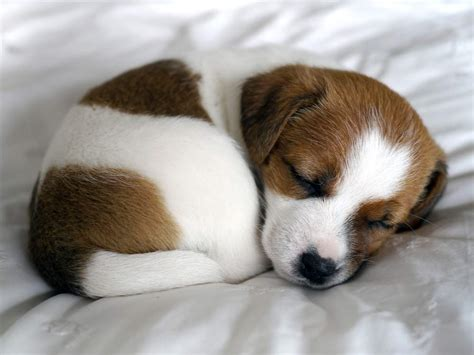 can you take a puppy home at 6 weeks 6 things you need to before owning a puppy