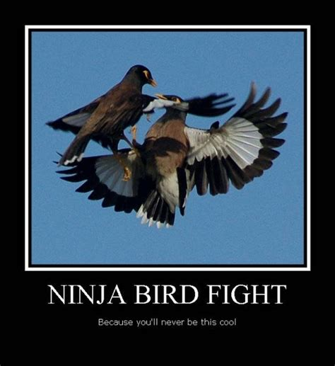 Fight Meme - 25 most funny ninja meme pictures and photos that will