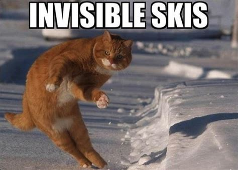 Funny Memes About Sex - cat funny meme invisible skis olivethepeople