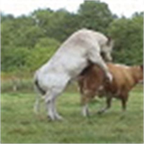 crazy horse mates cow funny animals pictures wild animal funny animal mating
