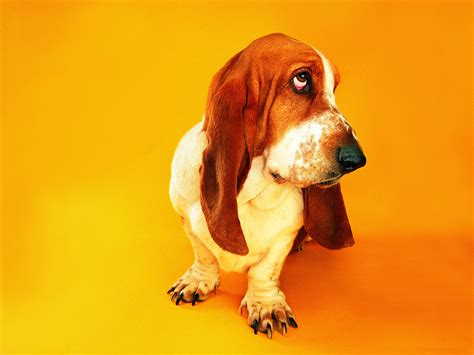 all wallpapers funny dogs wallpapers funny dogs wallpapers images photos pictures backgrounds