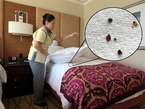 Can Bed Bugs Stay In One Room by 4 Simple Ways To Avoid Bed Bugs When Traveling Wcpo