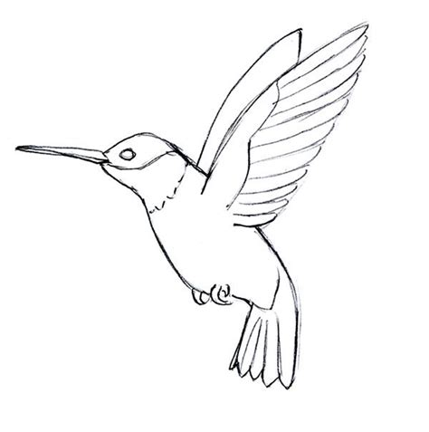 simple hummingbird drawing www imgkid com the image